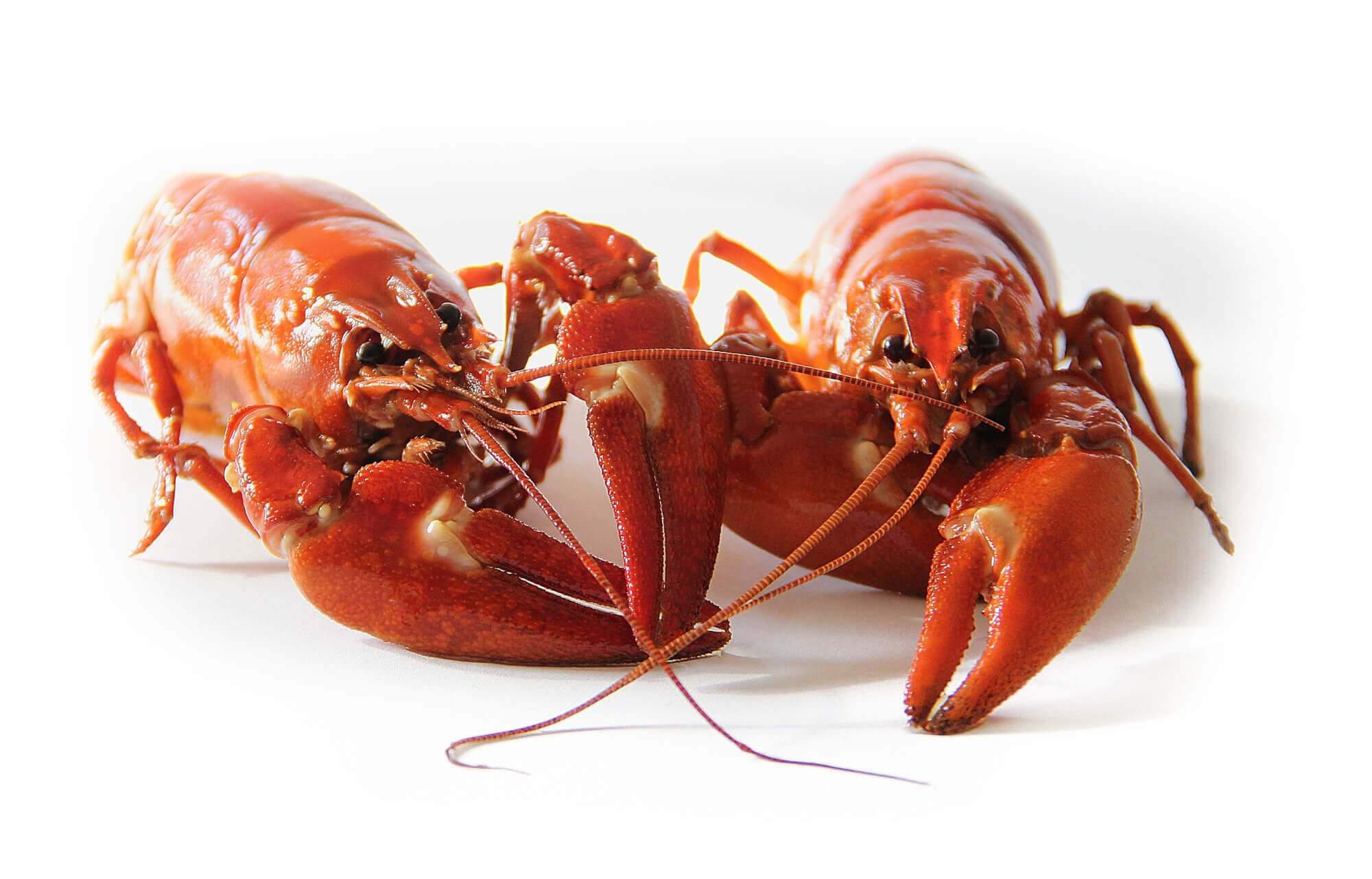 close-up-crawfish-crayfish-52959